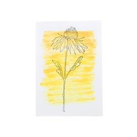 """Květinová gratulace s echinaceou """"Bylinkový sen"""""""